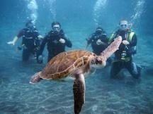 Scuba diving baptism