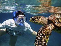 Swimming & snorkeling with turtles