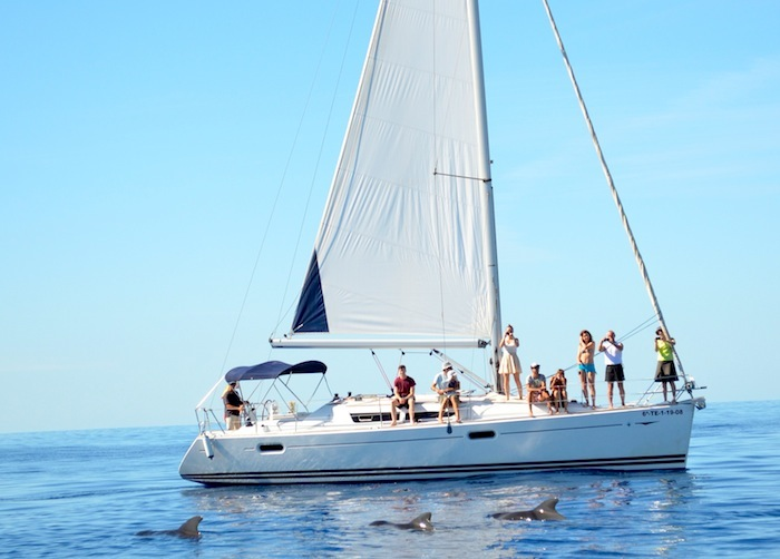 Ausflug Wal-und delfinbeobachtung vom segelboot