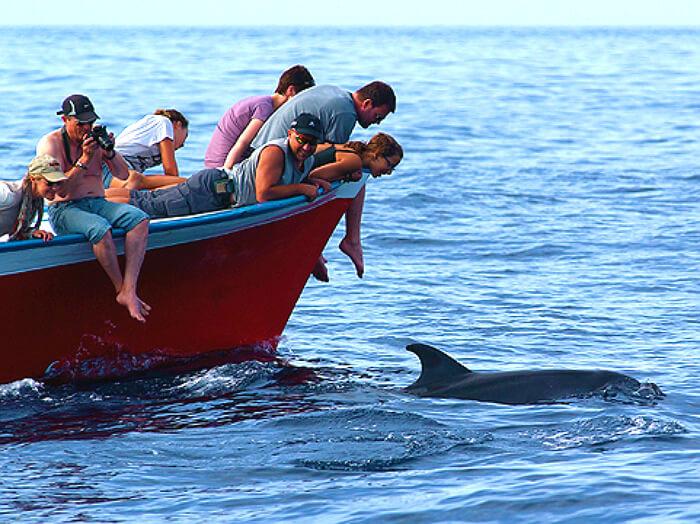 Ausflug Walbeobachtung in la gomera