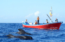 Whale watching in la gomera
