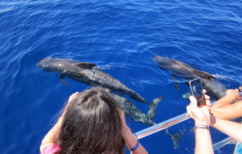 Excursion Observation de baleines et de dauphins lors d'une mini-croisière